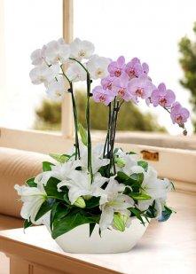 Devlerin Aşkı Orkide
